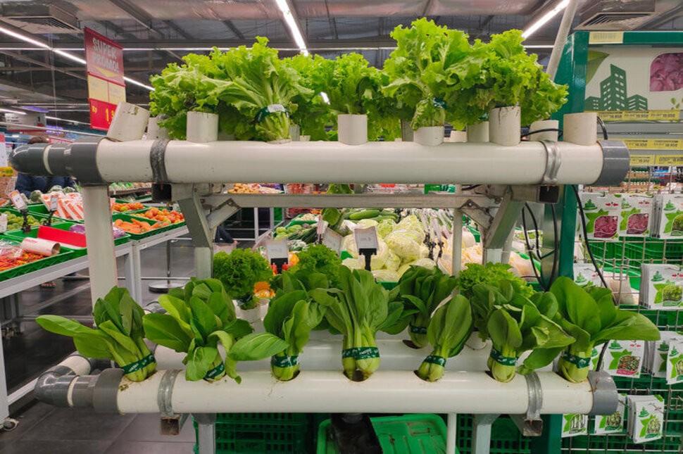 Jauh Lebih Mahal. Ini Perbedaan Sayur Organik dan Non-organik
